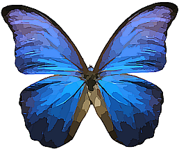 butterfly-295030_1280_ng