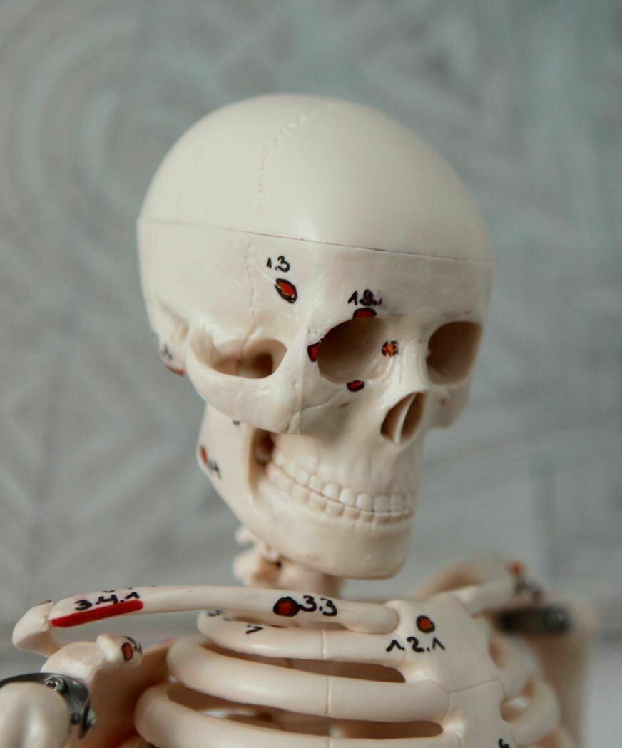 Skelettschädel