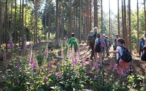 die Waldgruppe