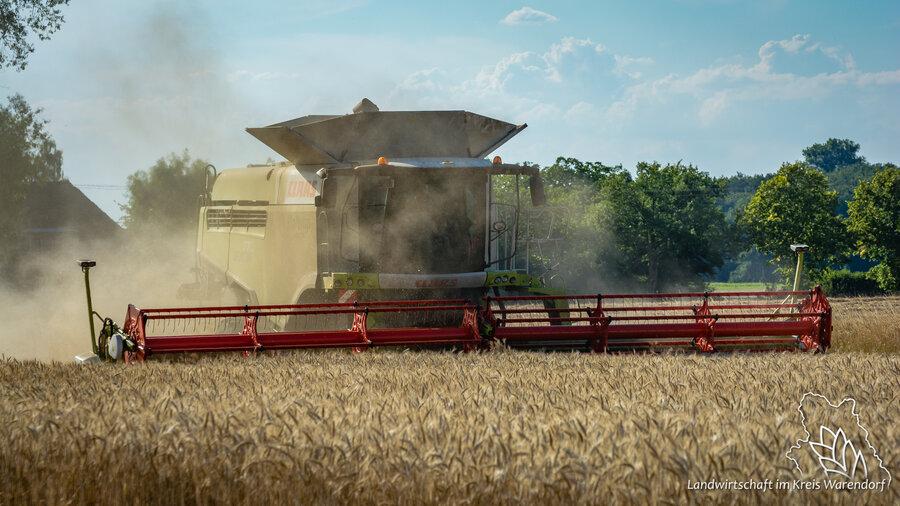 Getreideernte 1
