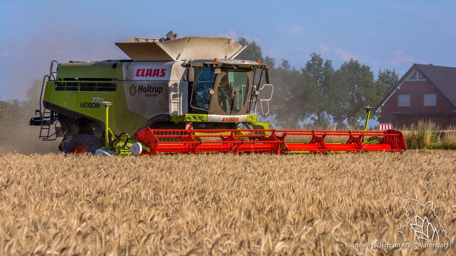 Getreideernte 2
