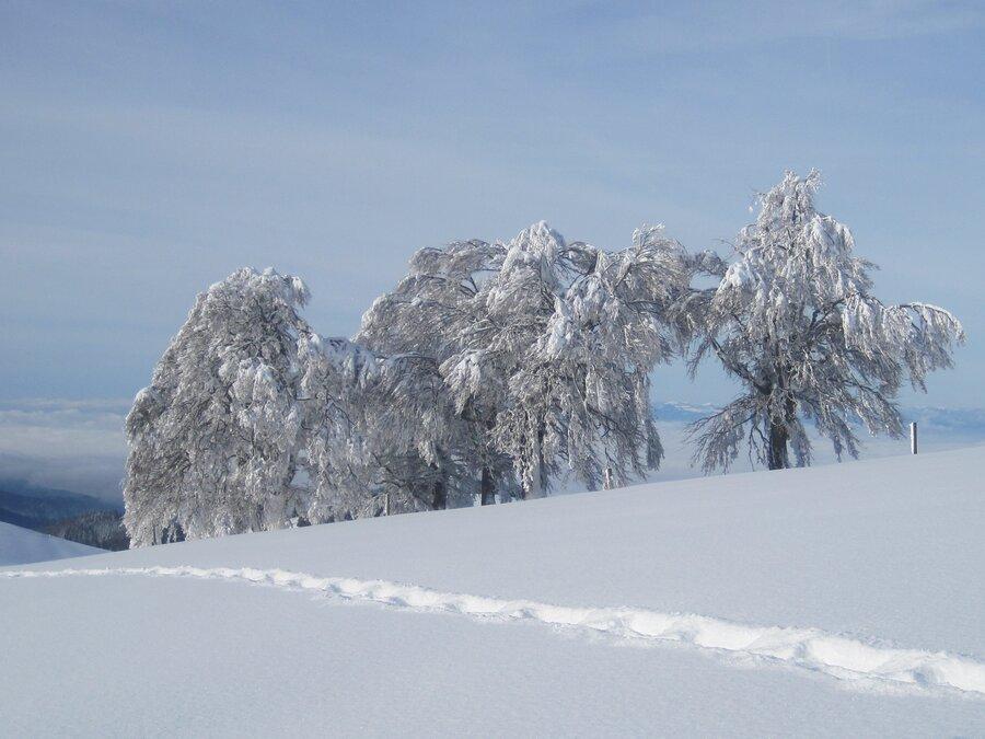 Regionsbild Winter