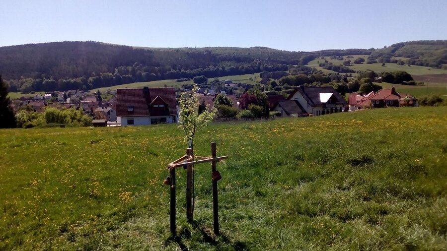 Ein neuer Baum