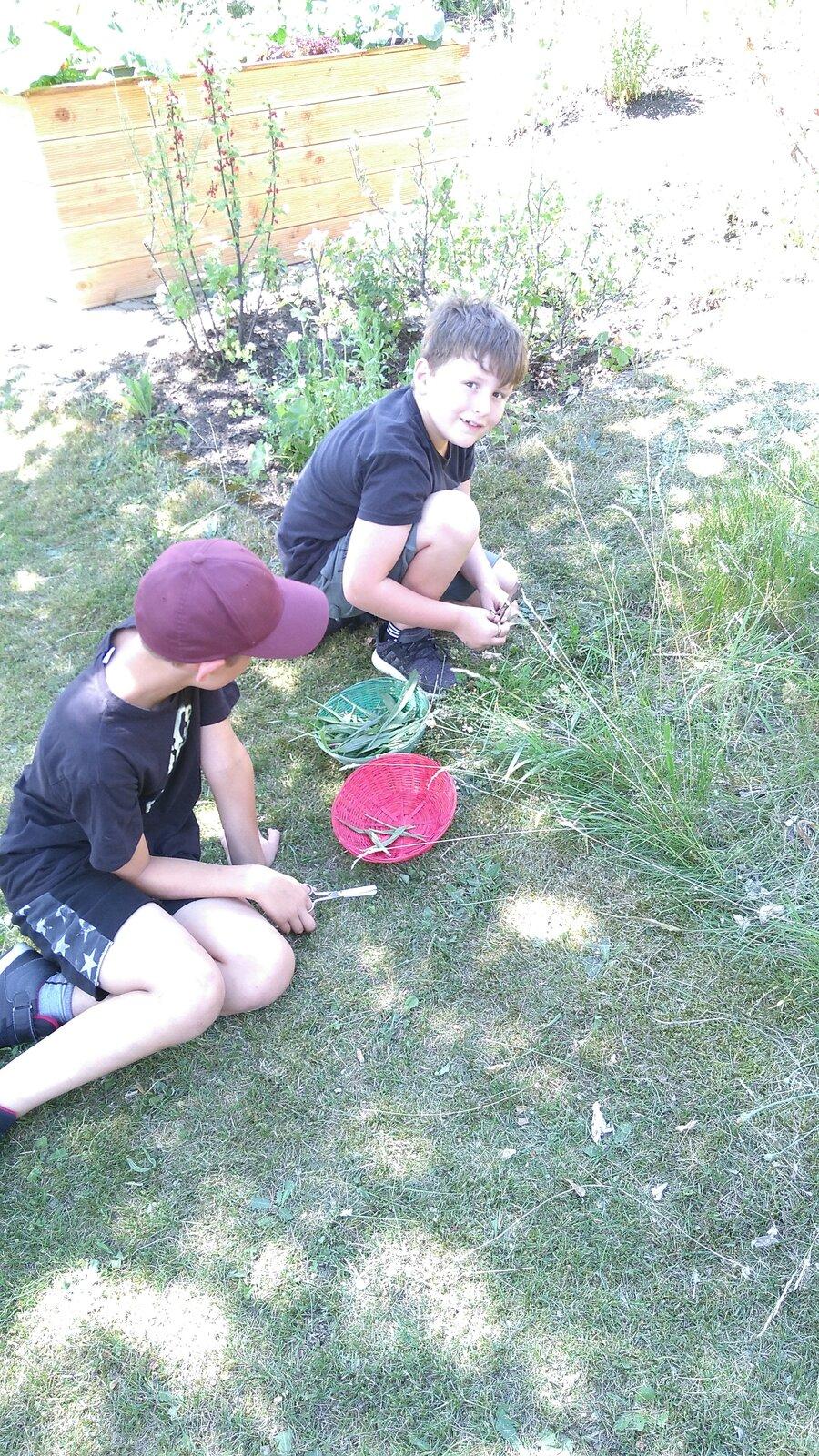 Wildkräuter sammeln