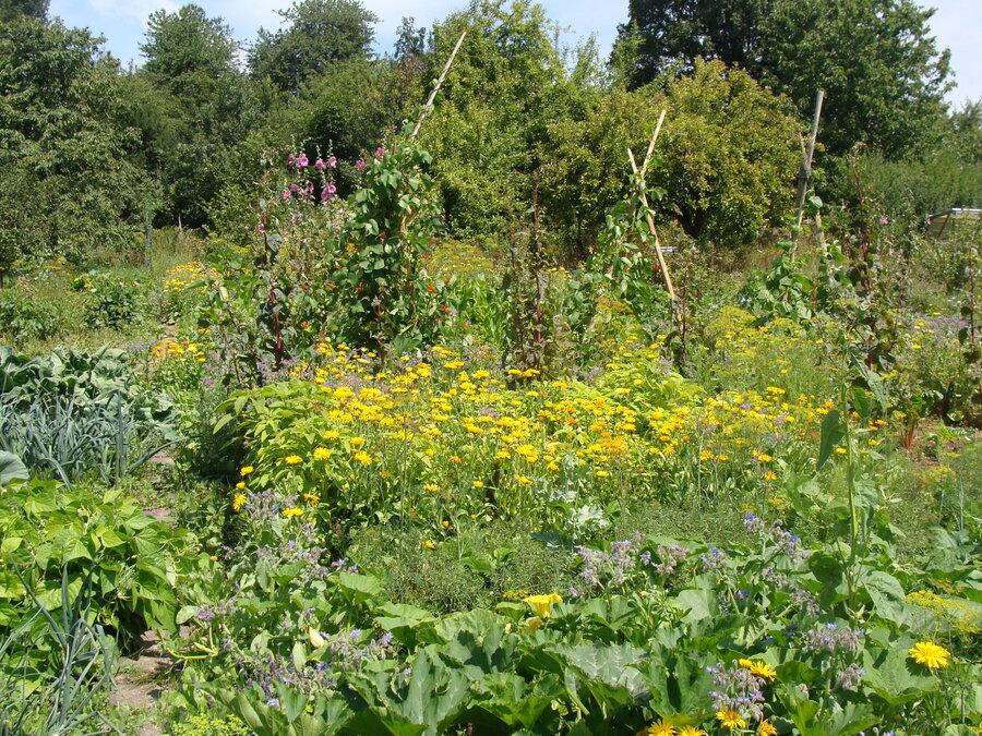 unser_Garten11
