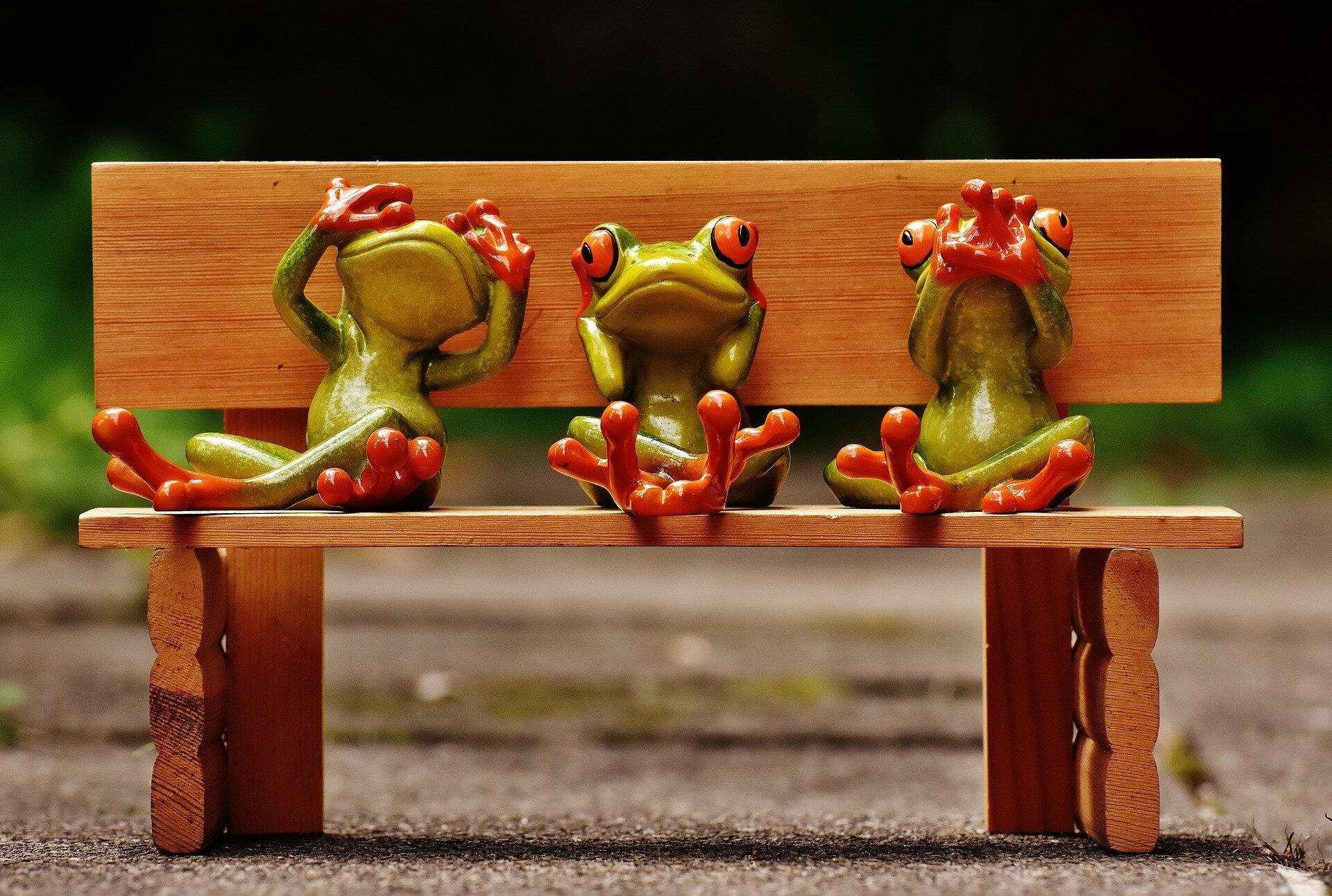 frogs-1610563_1920