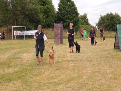 Foto von Hunden mit Haltern beim Training