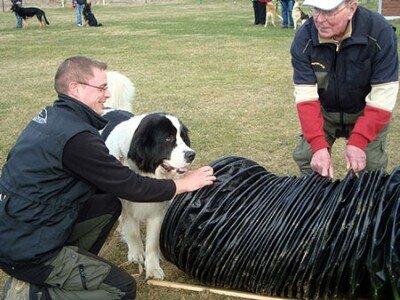 Foto von Hund mit Halter, der eine Tunnelübung absolviert