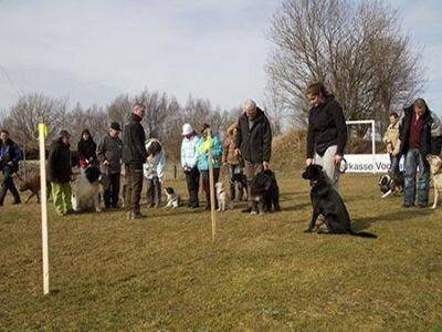 Foto von Hundehaltern, die ihren Hunden zusammen gruppiert sind
