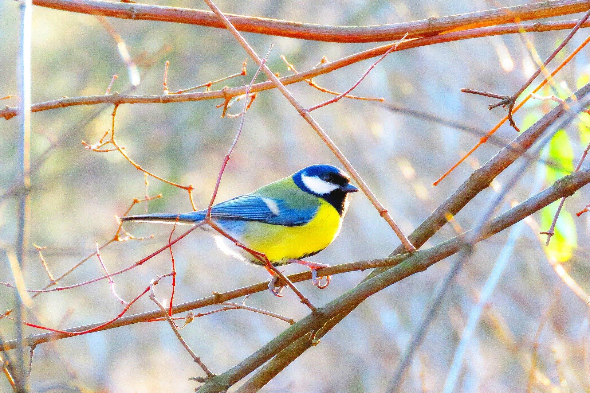 bird-3840315_1920