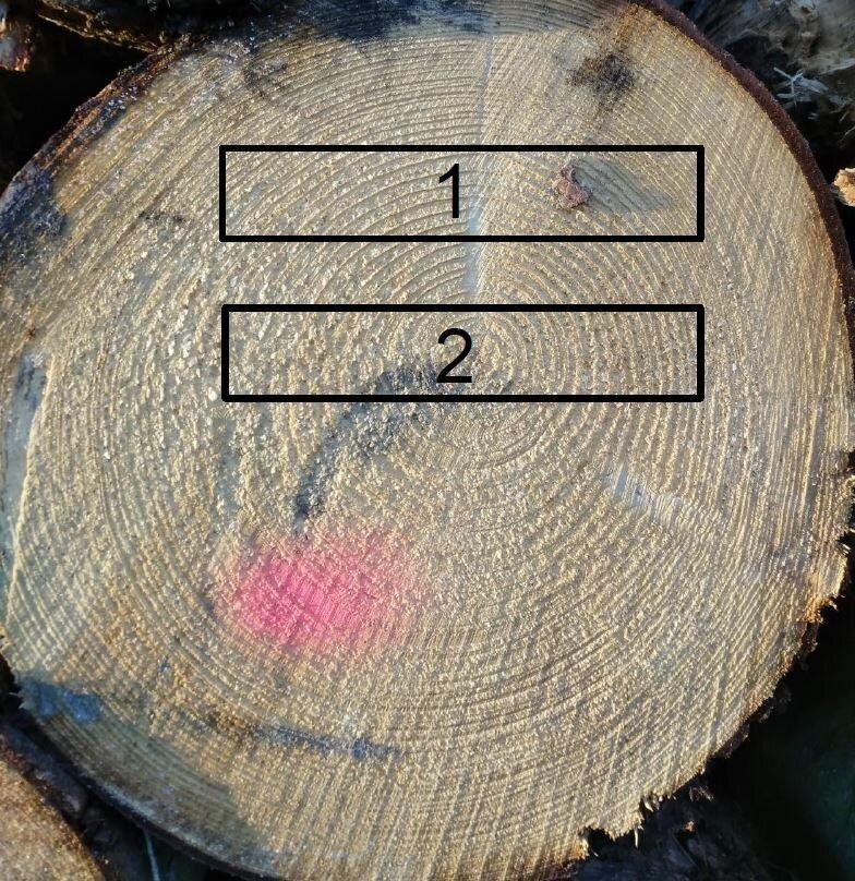 Holzschwund1