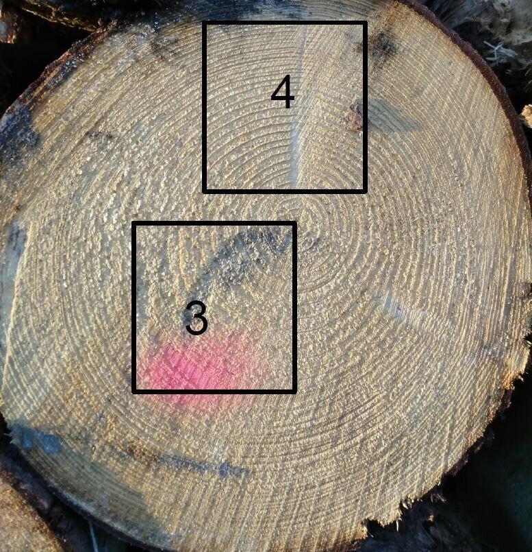 Holzschwund2