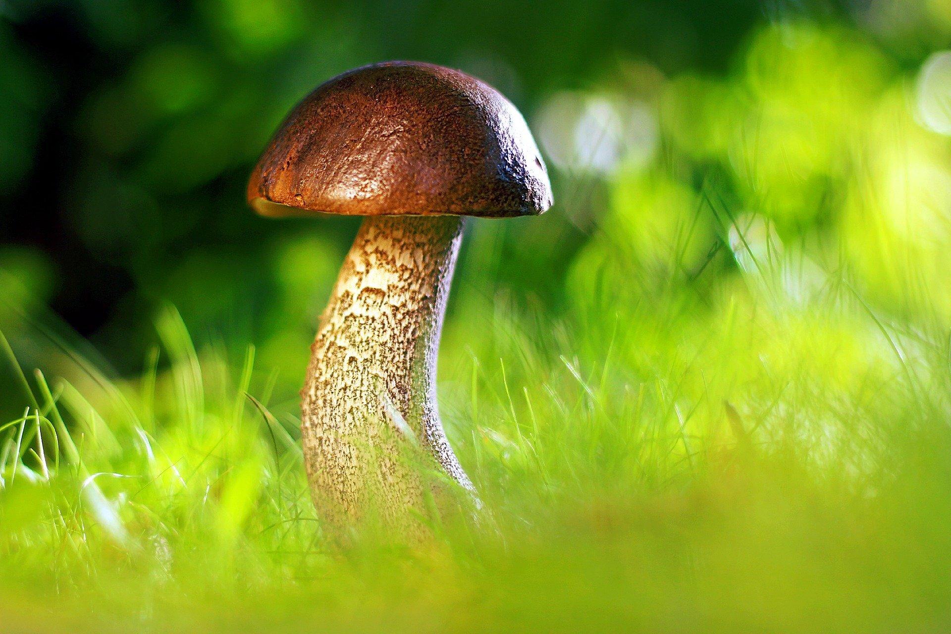 mushroom-3587888_1920