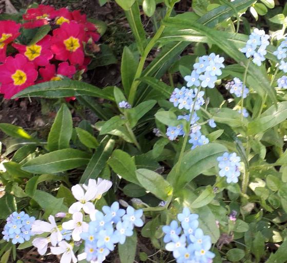 Blumen_U3_d
