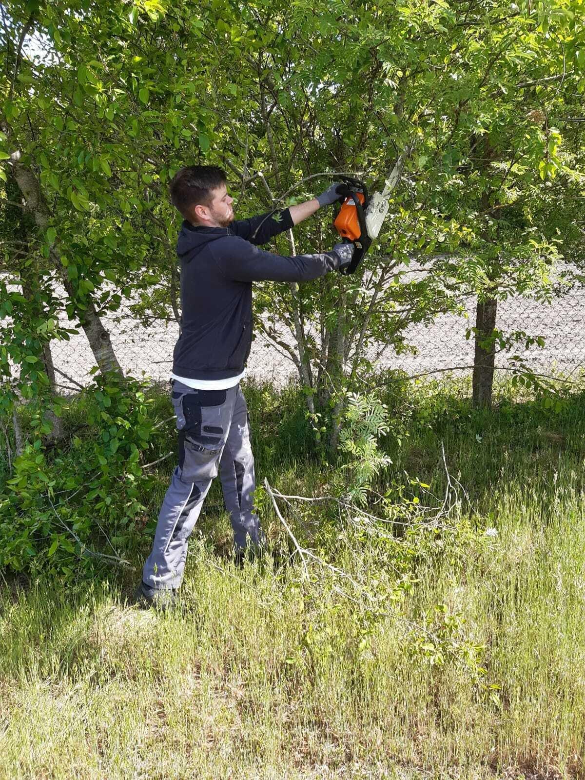Äste und Bäume schneiden