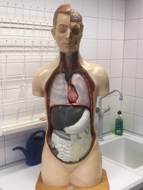 Organmensch