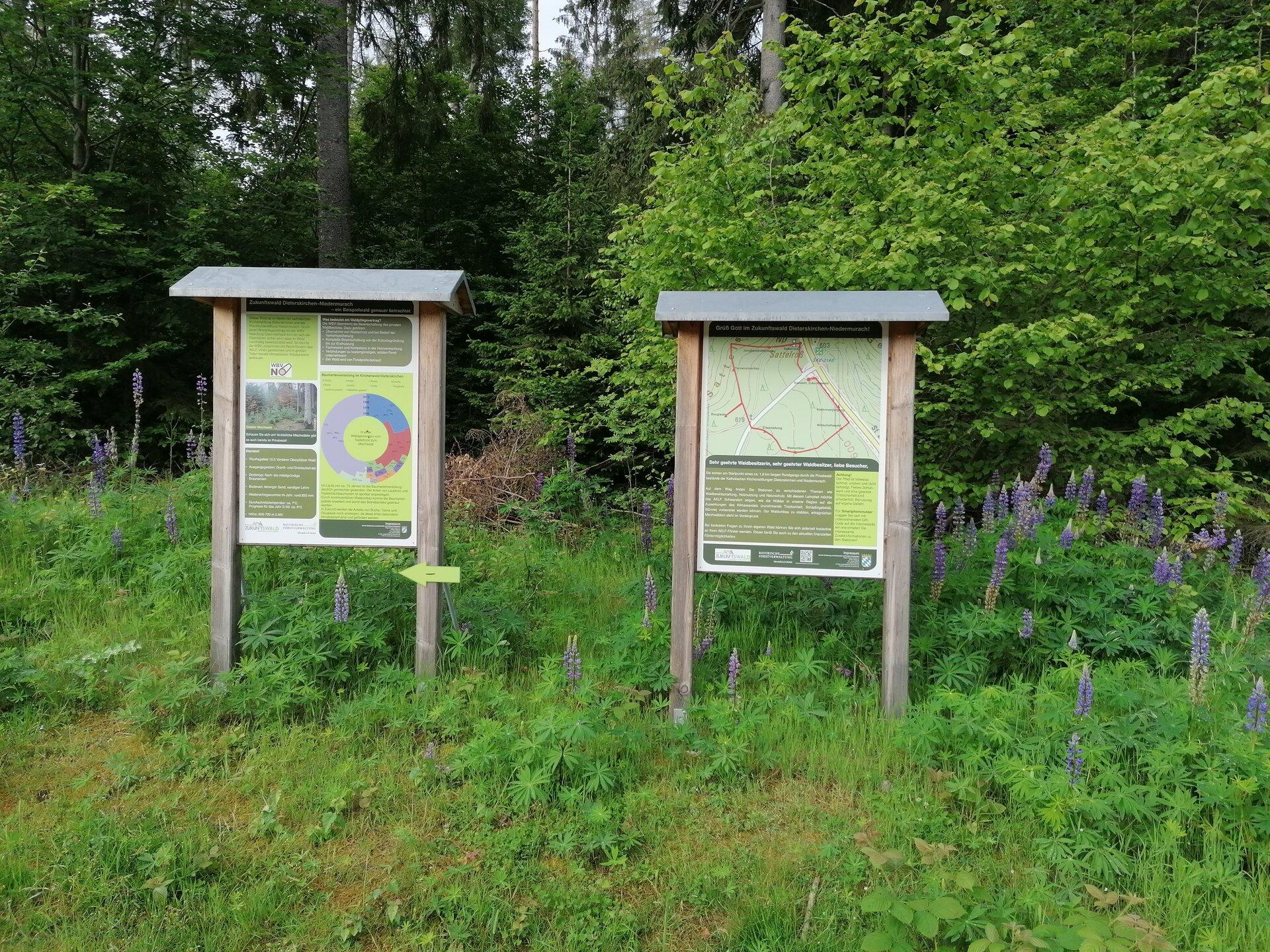 Zukunftswald_Dieterskirchen-Niedermurach