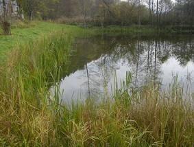 Teilbereich des sanierten Teiches (Nordufer) am 01.11.2010, Fotos: Christianna Serfling