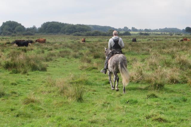 Ulf auf dem Weg zur Herde