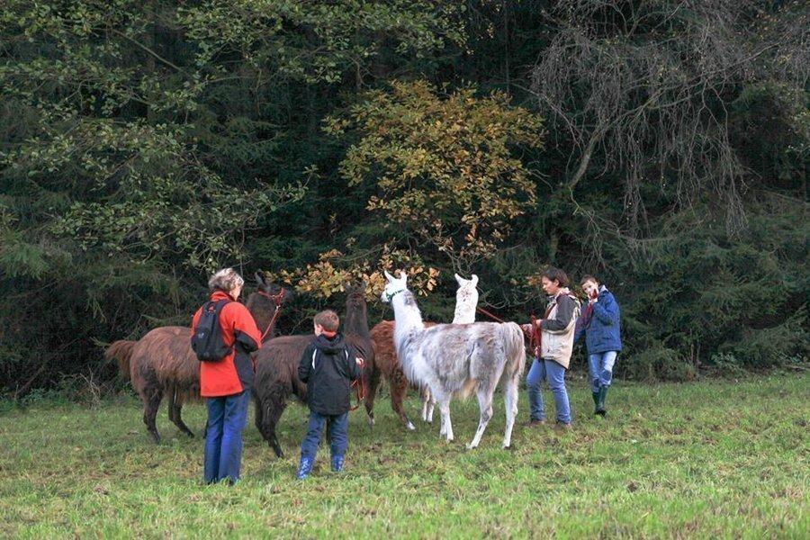 Lamawanderung in Arnsgrün