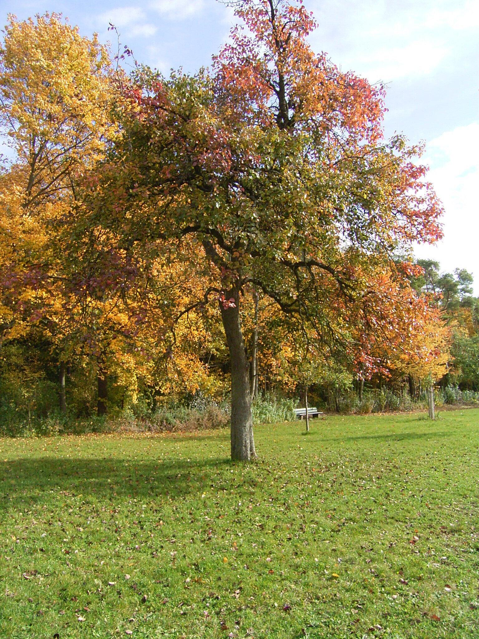 Herbstspektakel