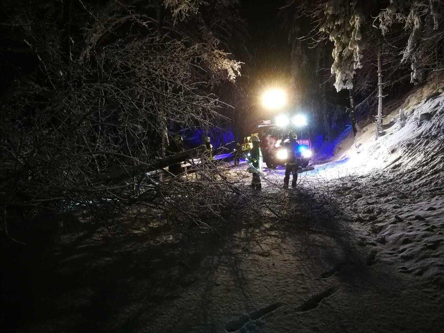 umgestürzter Baum - B90