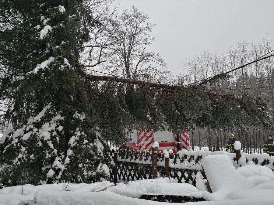 großer Ast in Stromleitung - Rodacherbrunn