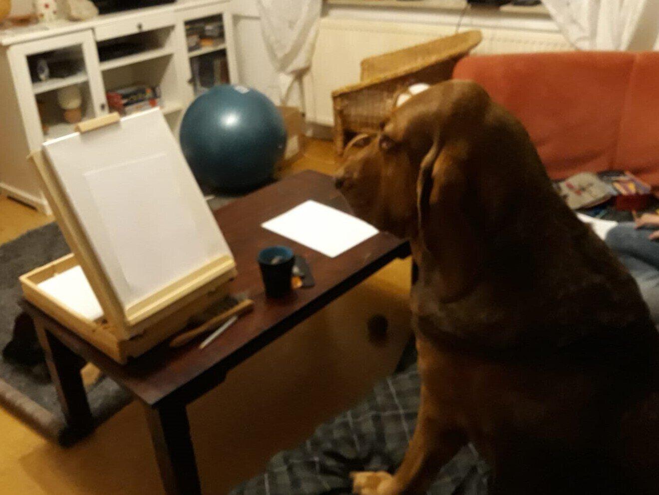 lernender Hund, Bild: Anima Wolf