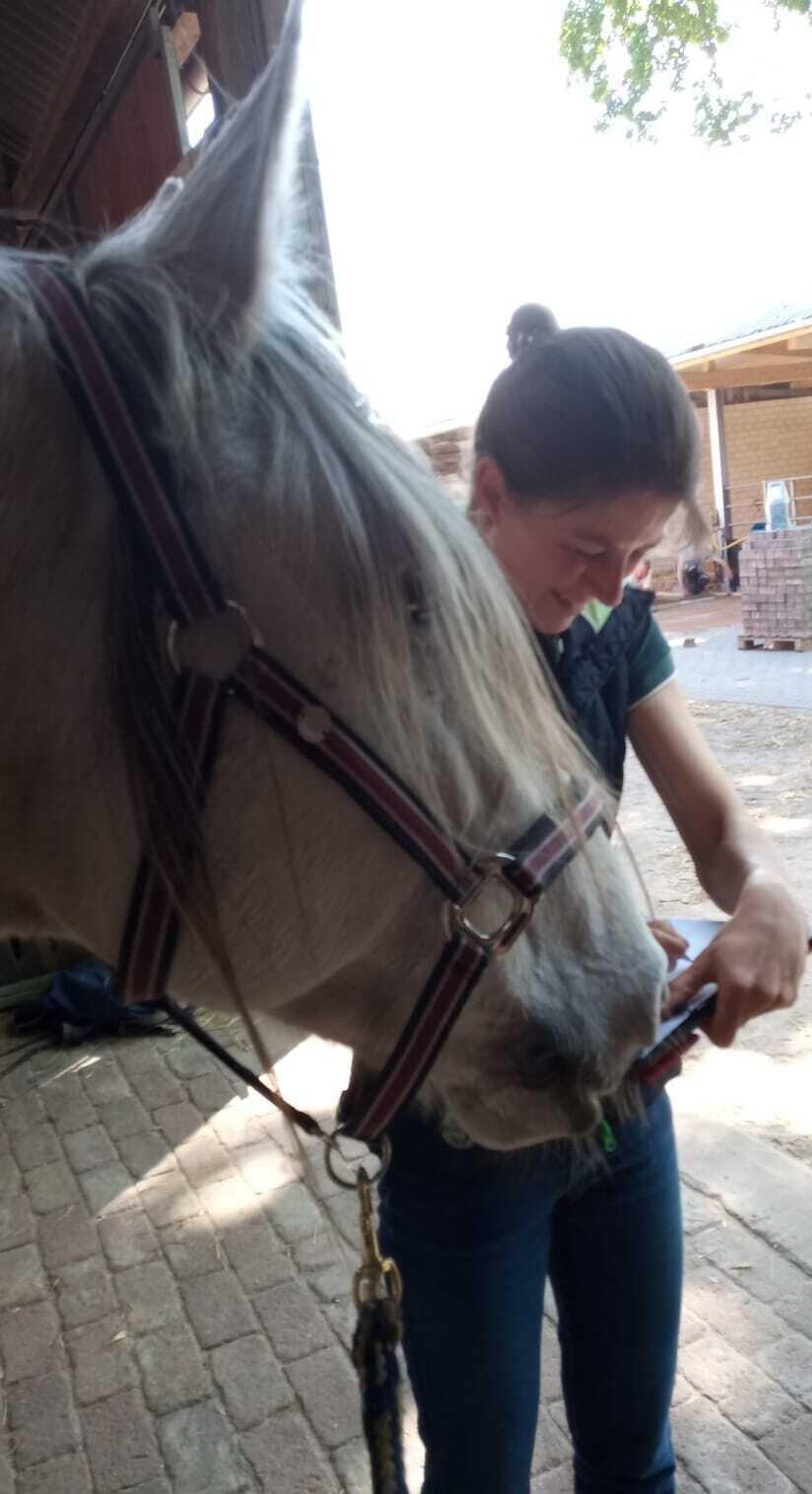lesendes Pferd, Bild: Anima Wolf