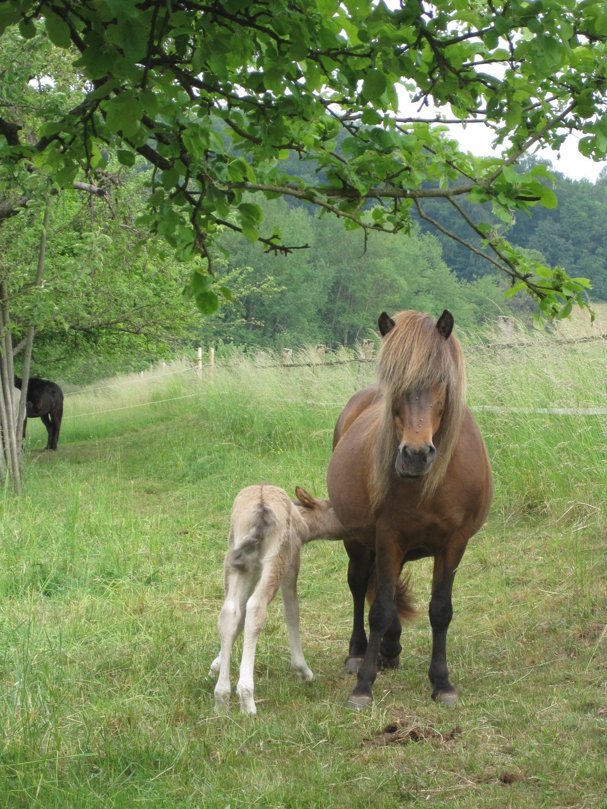 Pferd und Fohlen