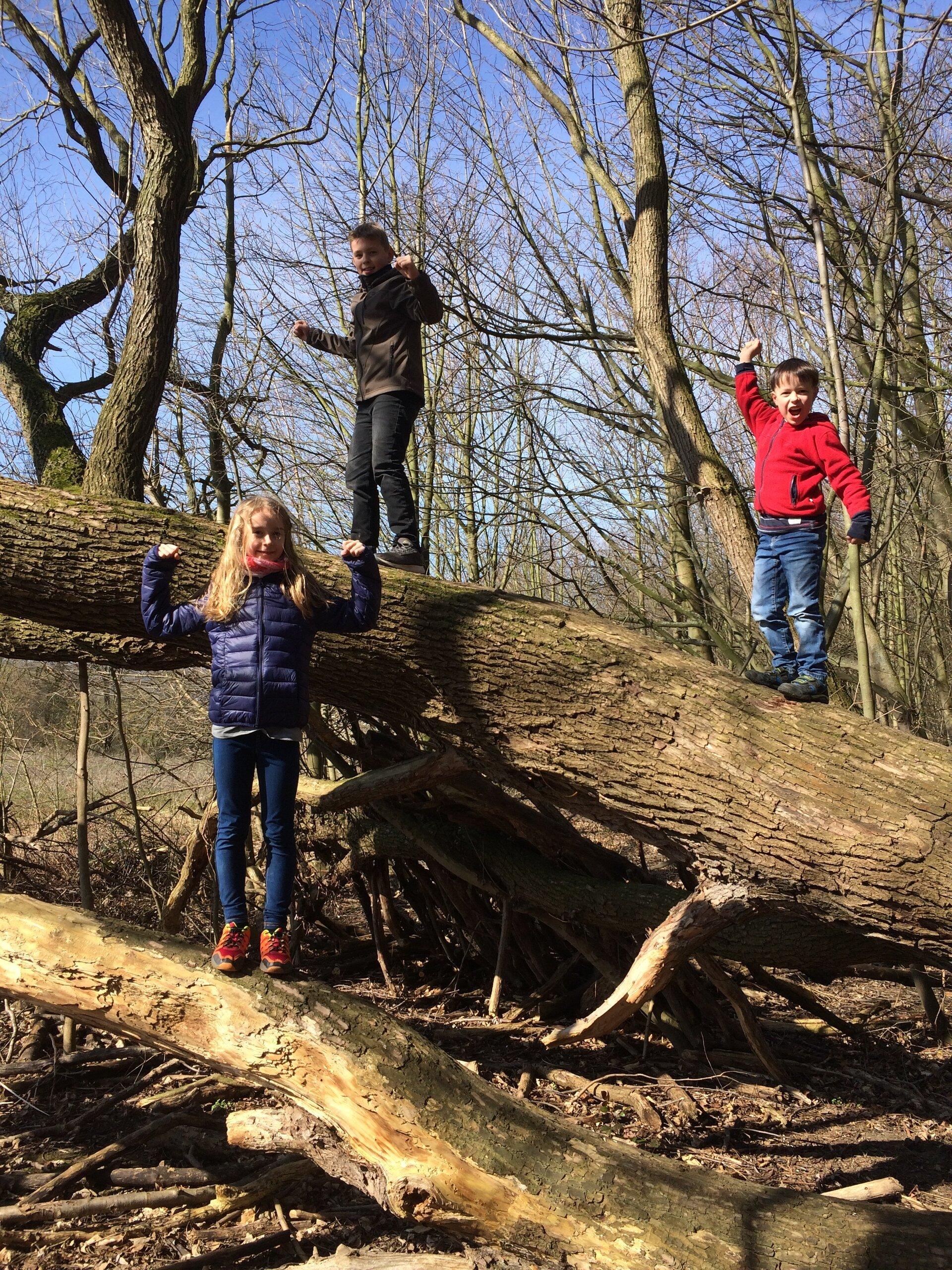 Schiefer Baum