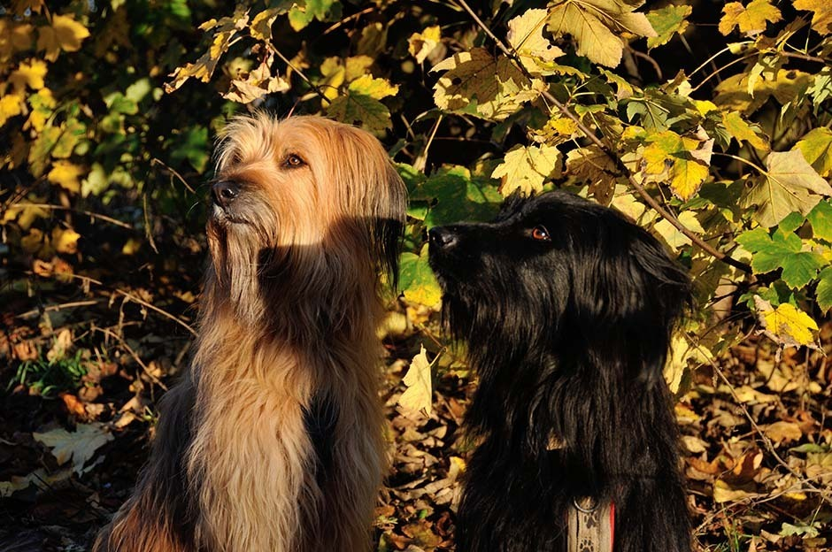 Nessie und Jola