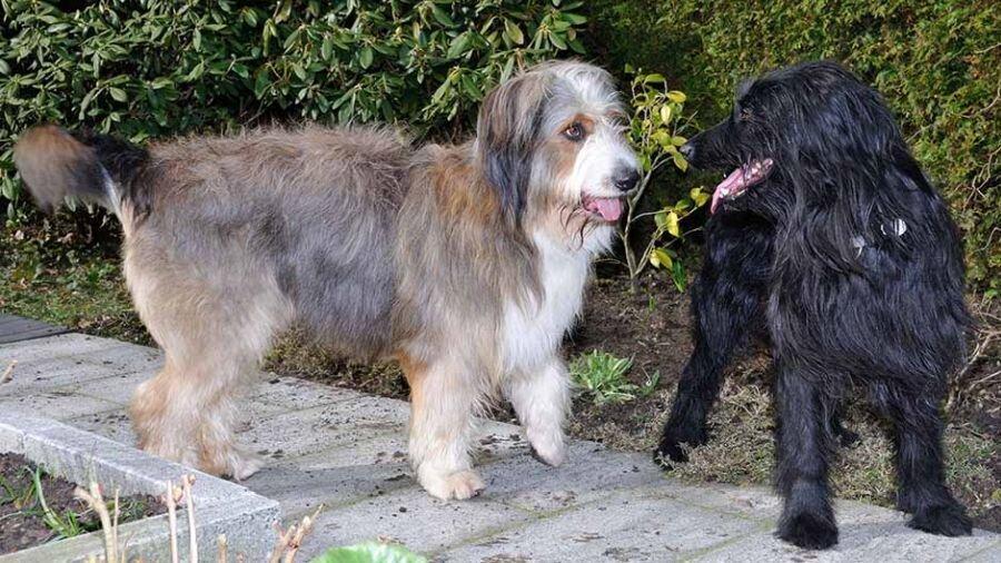 Nessie und O'Kenny