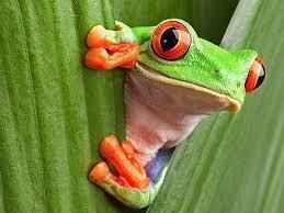 """Frosch sagt: """"Hallo!"""""""