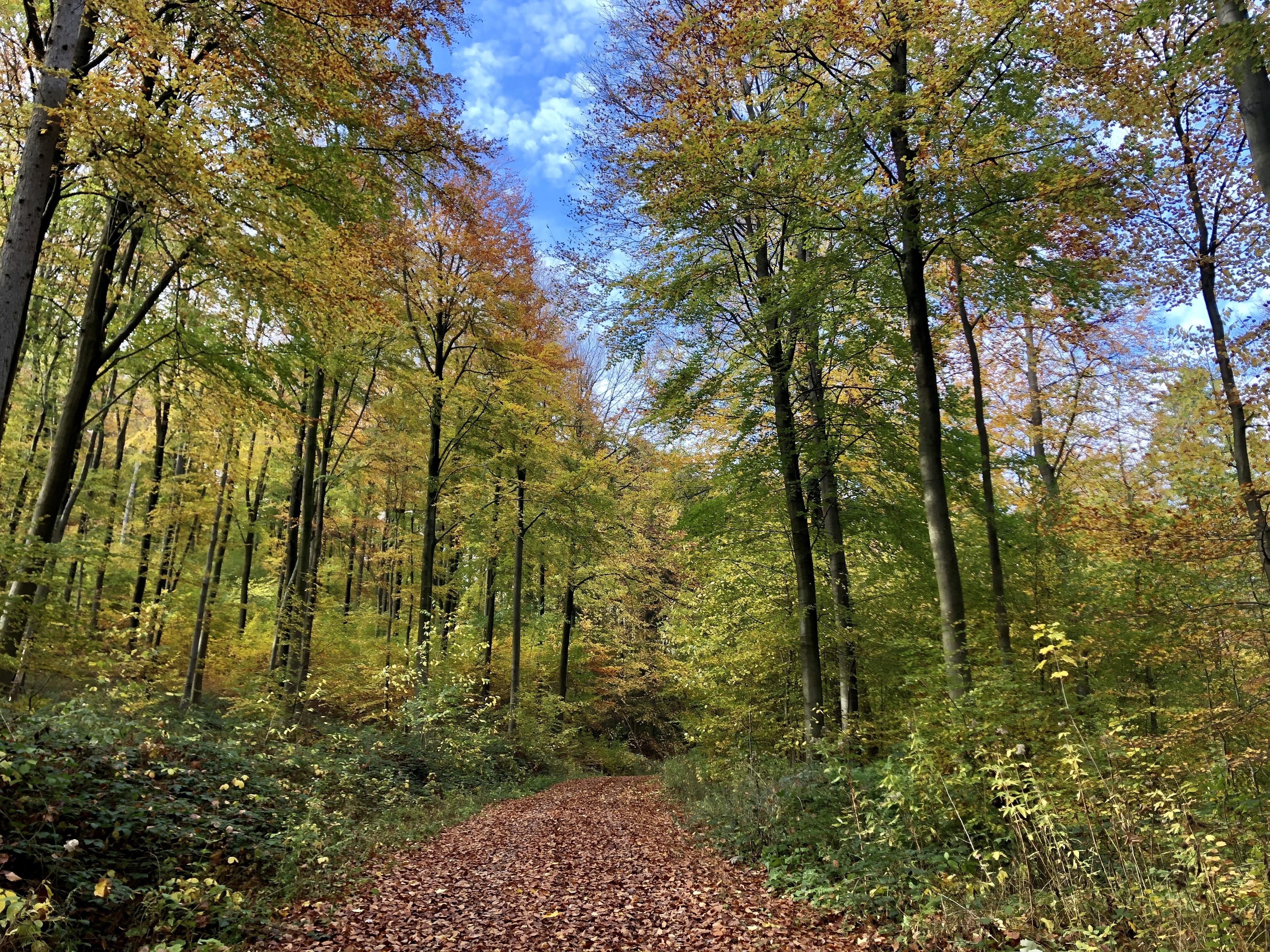Bunter Deisterwaldweg