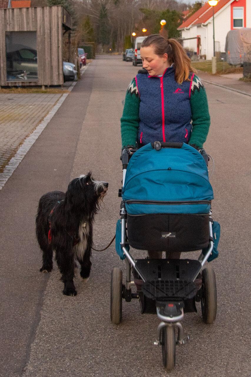 Kinderwagen und Hund