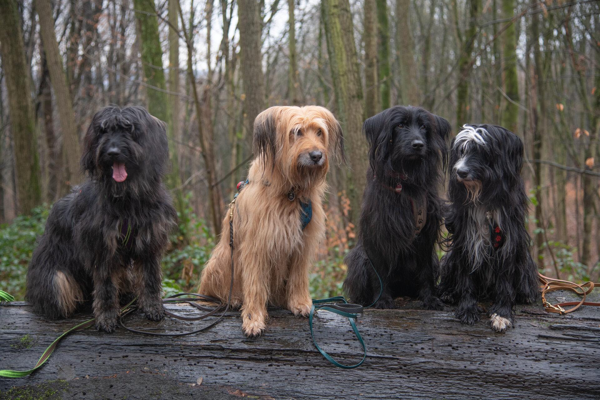 Große Hunde