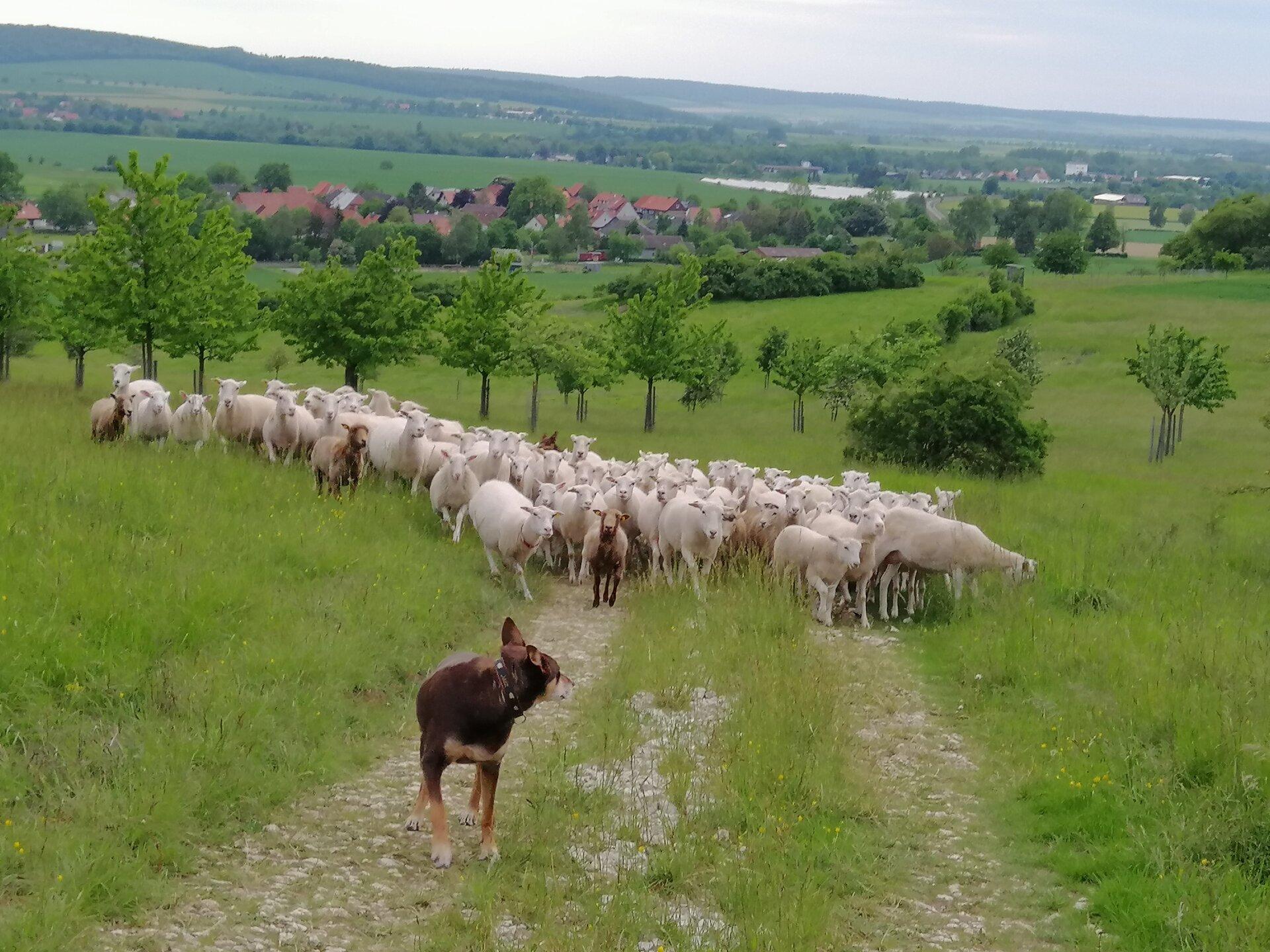 Umtrieb zum Hirschberg (©J. Kroll)