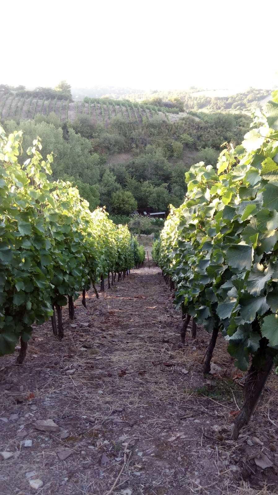Weinreihe