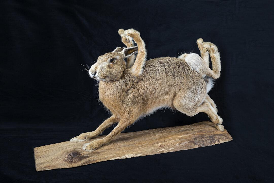 8-beiniger Hase