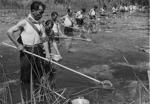 Combating malaria on Sardinia island Quando la malaria uccideva in Sardgena – L'Espresso