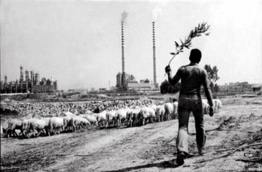 Sardinia, a shepherd grazes his flocks. In the background, the chimneys of the industrial area snort Il nuovo piano di rinascita – Il Manifesto Sardoll Manifesto Sardo