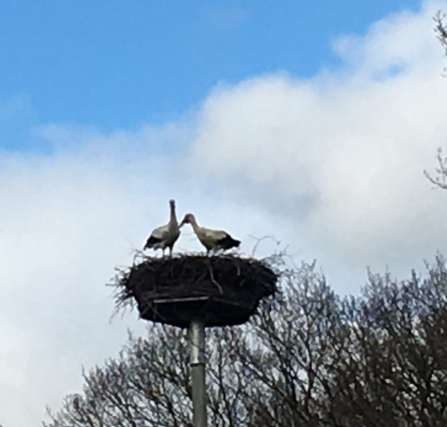 Storch 01.04.21