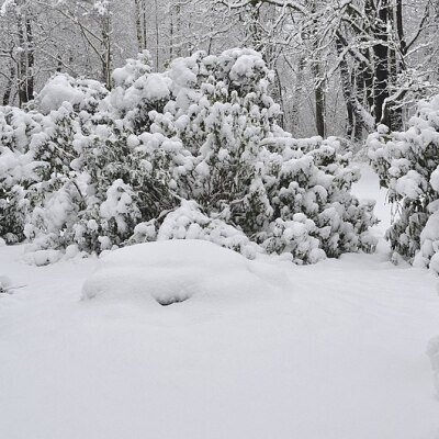 800px-Lebenswertes_chemnitz_winter_stadtpark_schnee_rhododendron[1]