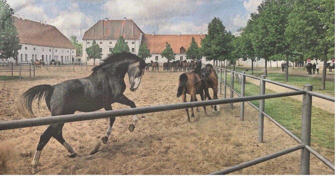 Insgesamt leben etwa 400 Pferde auf dem Haupt- und Landgestüte Neustadt/Dosse.