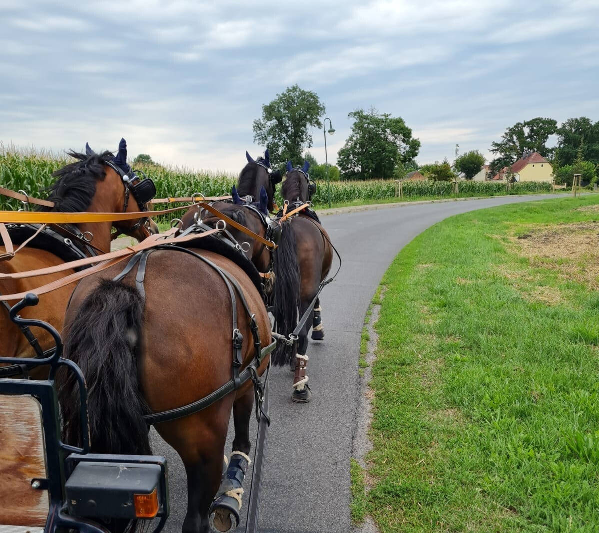 Ponyvierspänner