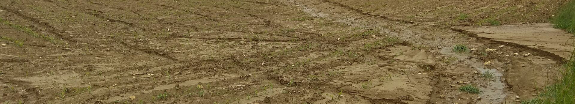 Bodenerosion in einem brachliegendem Feld bei Lörrach