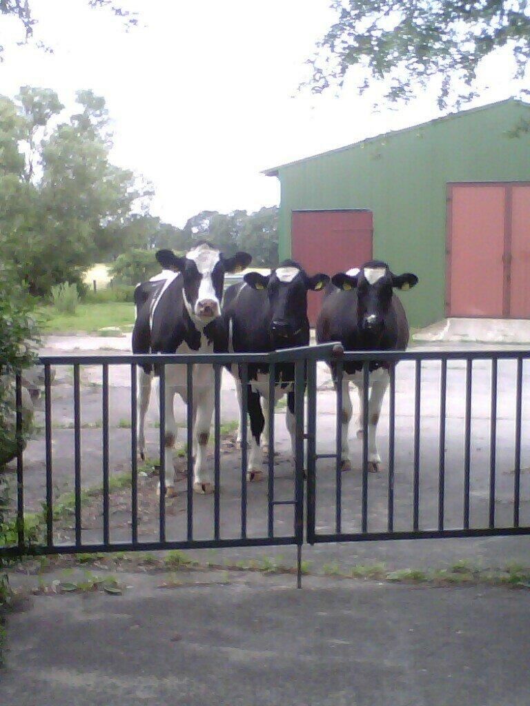 Bauernhof Holthusen