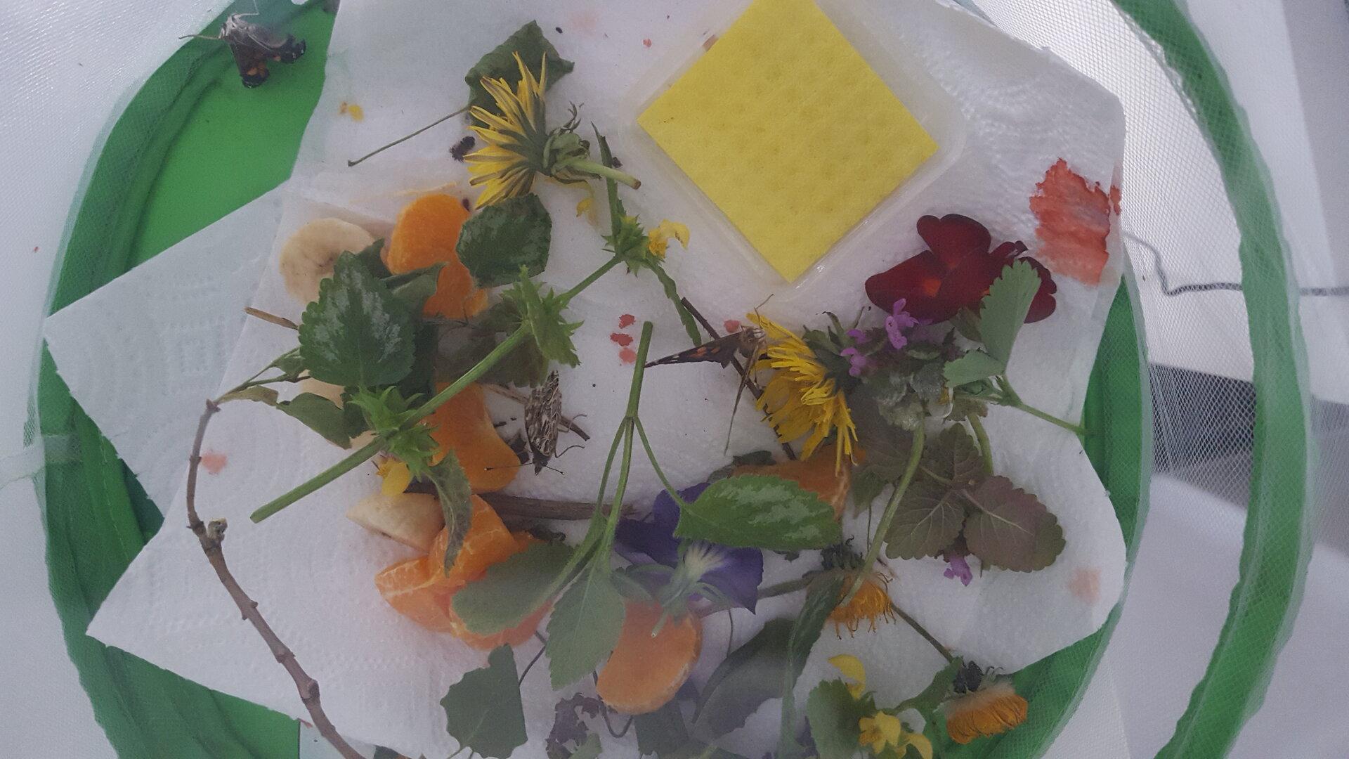 Und werden zu Schmetterlingen