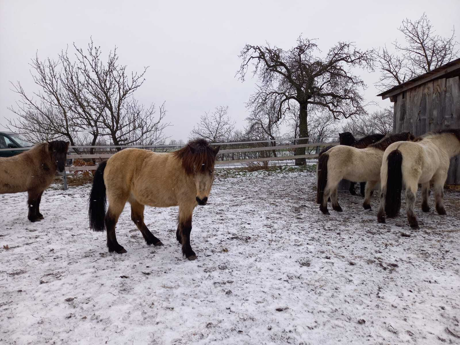 isis im winter